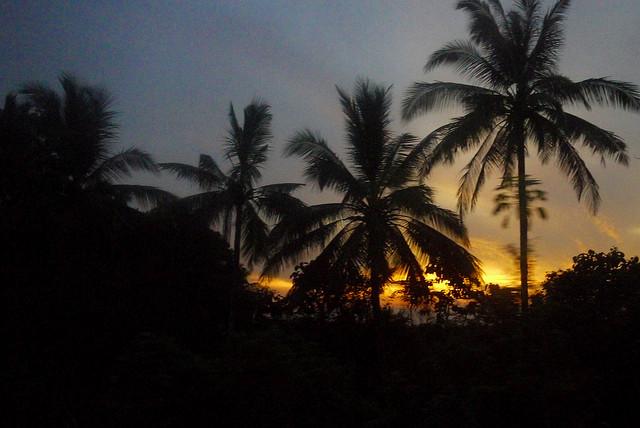 Jungle Sunset by Jody McIntyre