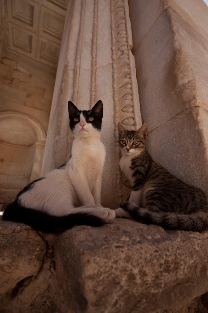 Cats at Ephesus by Anthony Freeman