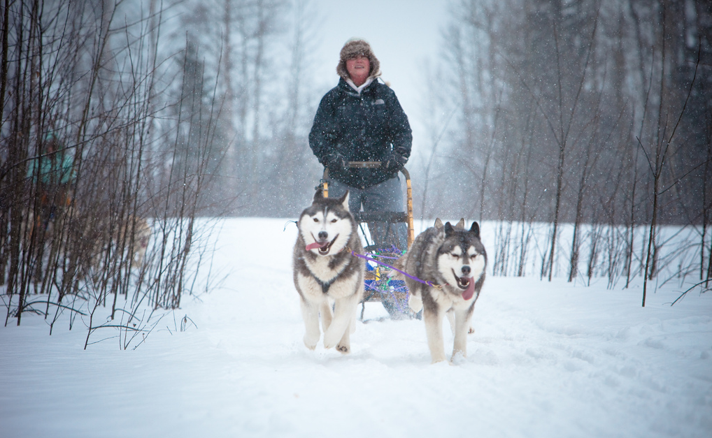 Dog Sledding in Prince George British Columbia by Kris Krug