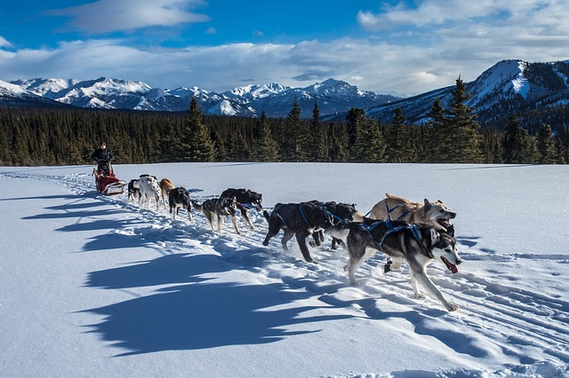 dog sledding wintersports insurance