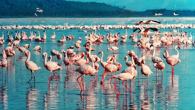 Kenya flamingo travel Image